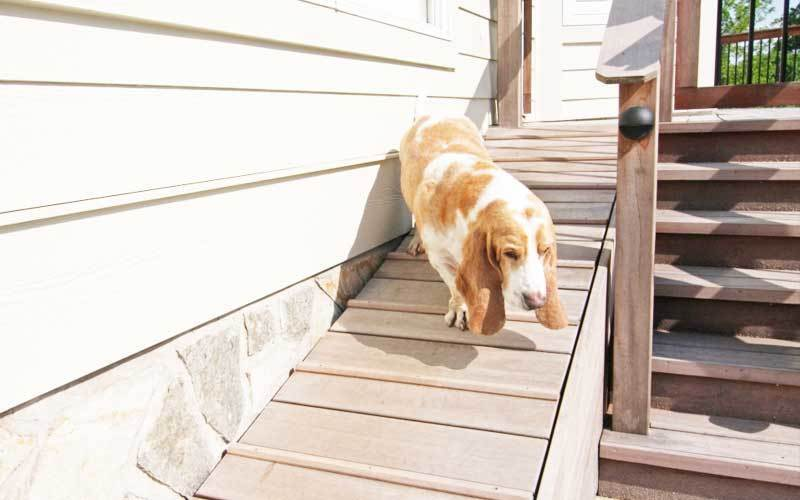Dog Ramp For Stairs