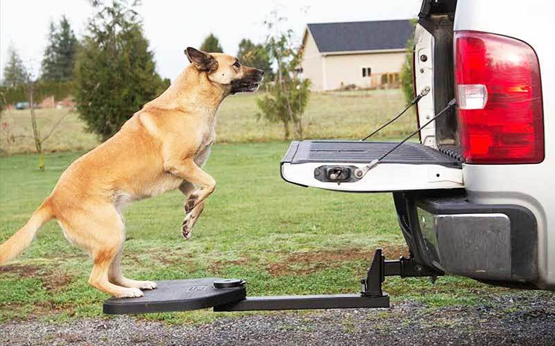 best dog ramp for suv review