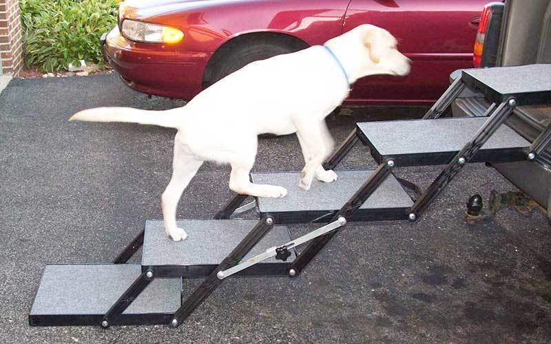 best dog ramp for truck review