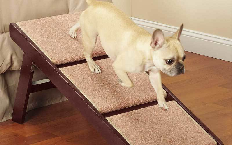 dog ramp for truck seat review