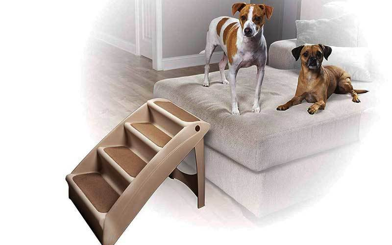 best dog ramp for large dogs