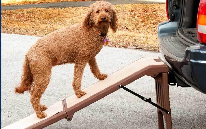 dog ramp for car
