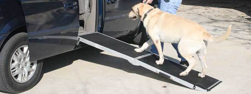 best dog ramp review