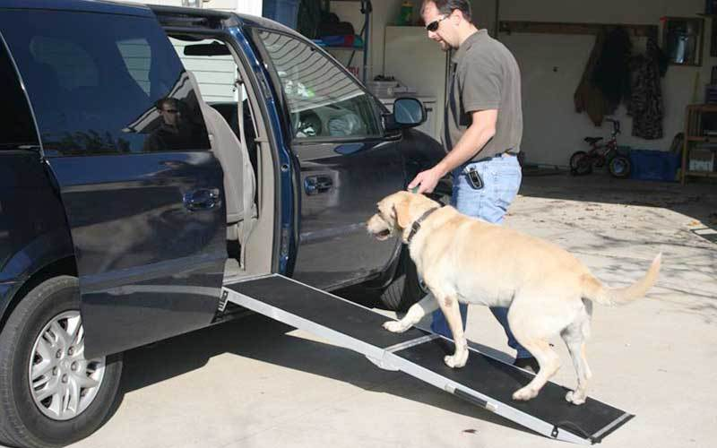 Best Dog Ramp You Can Choose
