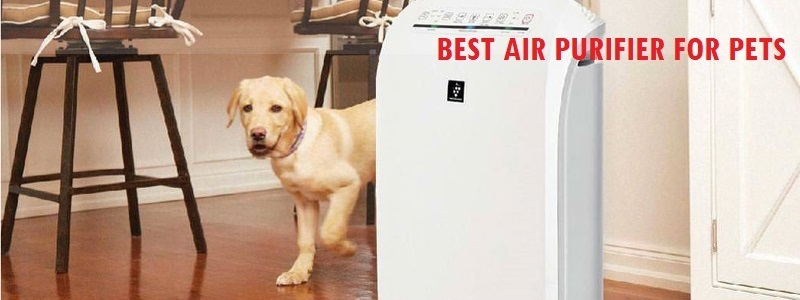 Best Air Purifier For Pets Review